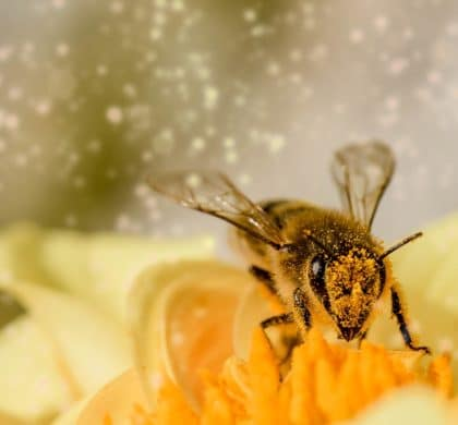 Bee mortality not just alarming for environmentalists