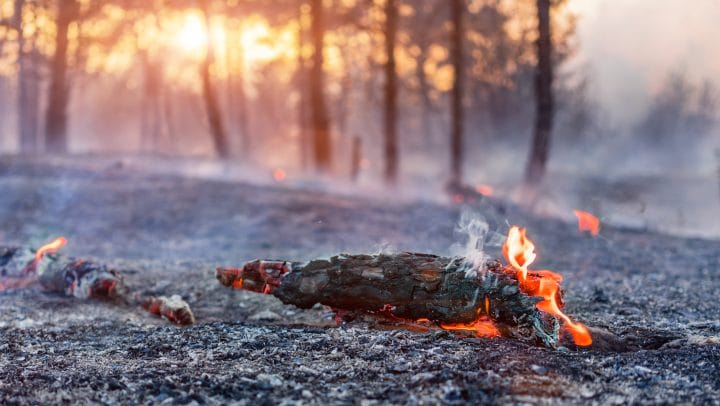 Risk of forest fires due to global heating